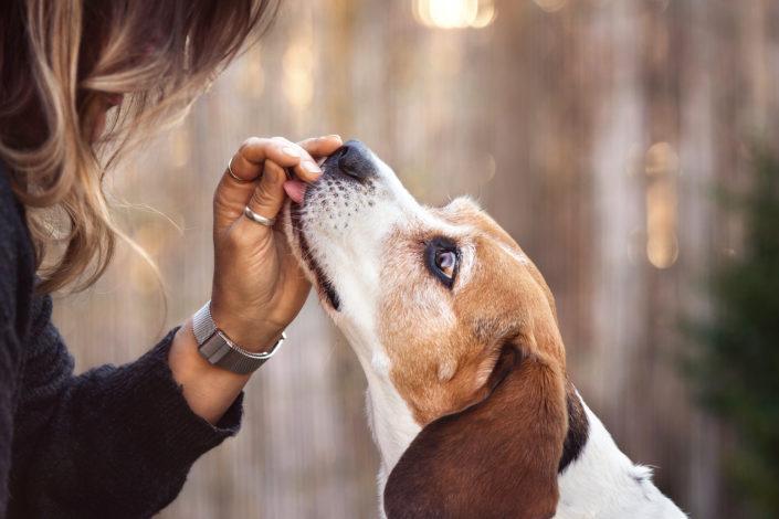 Professionelle Hundefotografie Hundeblick