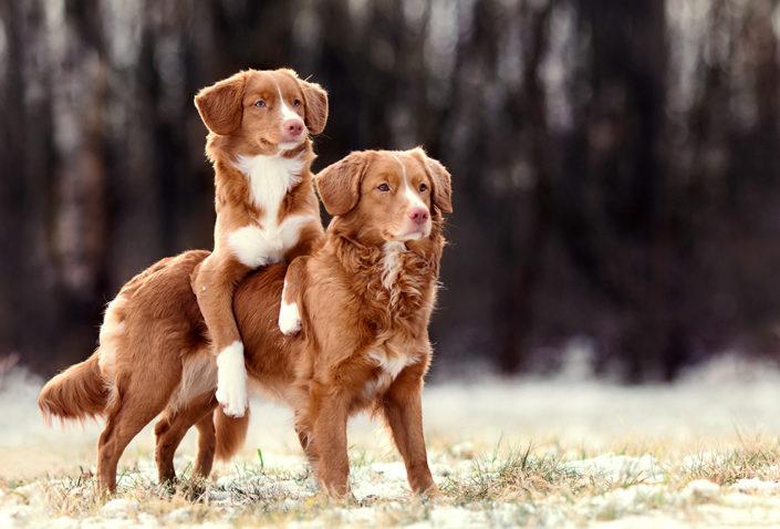 Hundefotografie Tricks Hunde in Northeim