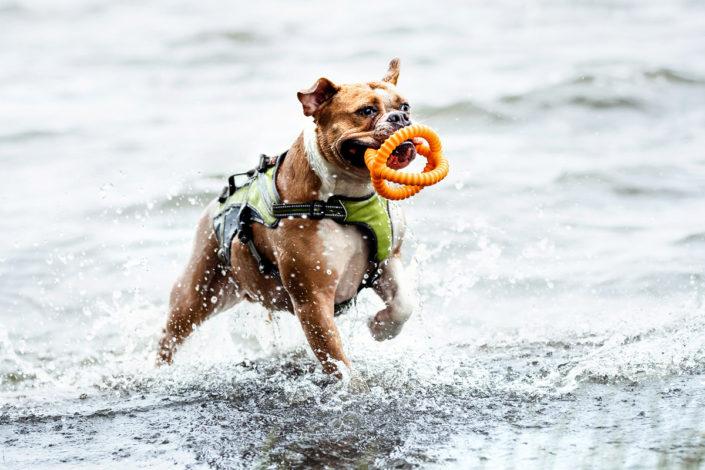 Professionelle Hundefotografie Hund im Wasser