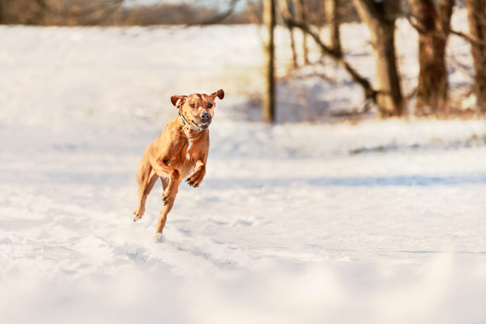 Professionelle Hundefotografie Fotoshooting Hund im Schnee in Reutlingen