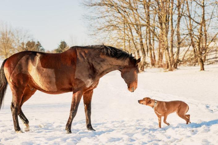 Professionelle Hundefotografie Hund und Pferd im Schnee in Reutlingen