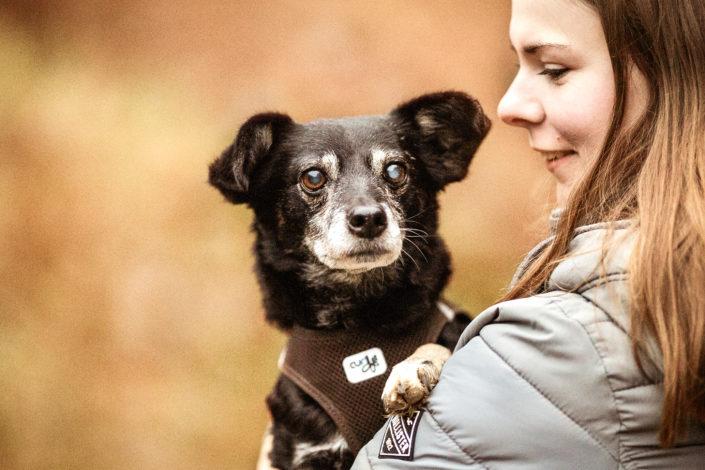 Professionelle Hundefotografie Fotoshooting Hund in Lüneburg