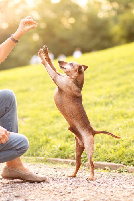 Professionelle Hundefotografie Fotoshooting Hund in Hannover springend